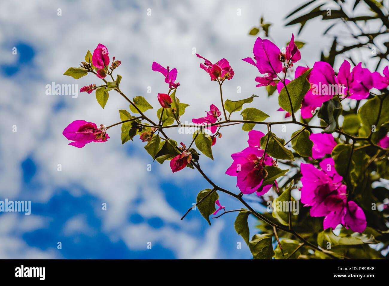 Abstract Natura Naturale Rosa Sfondo Fiori Di Primavera E Estate Dal