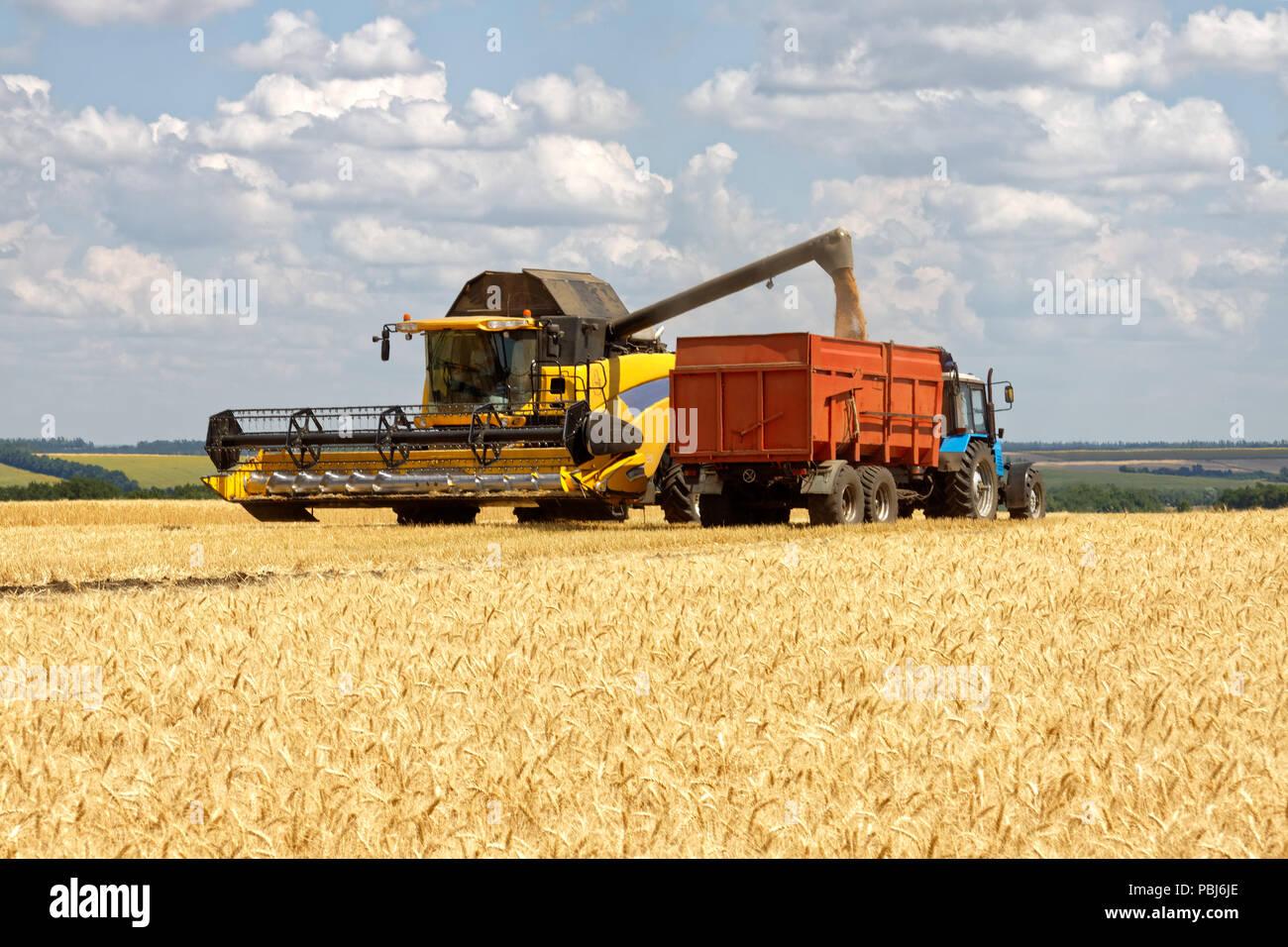 Mietitrebbia di grano di carico del carrello al momento del raccolto in una soleggiata giornata estiva Foto Stock