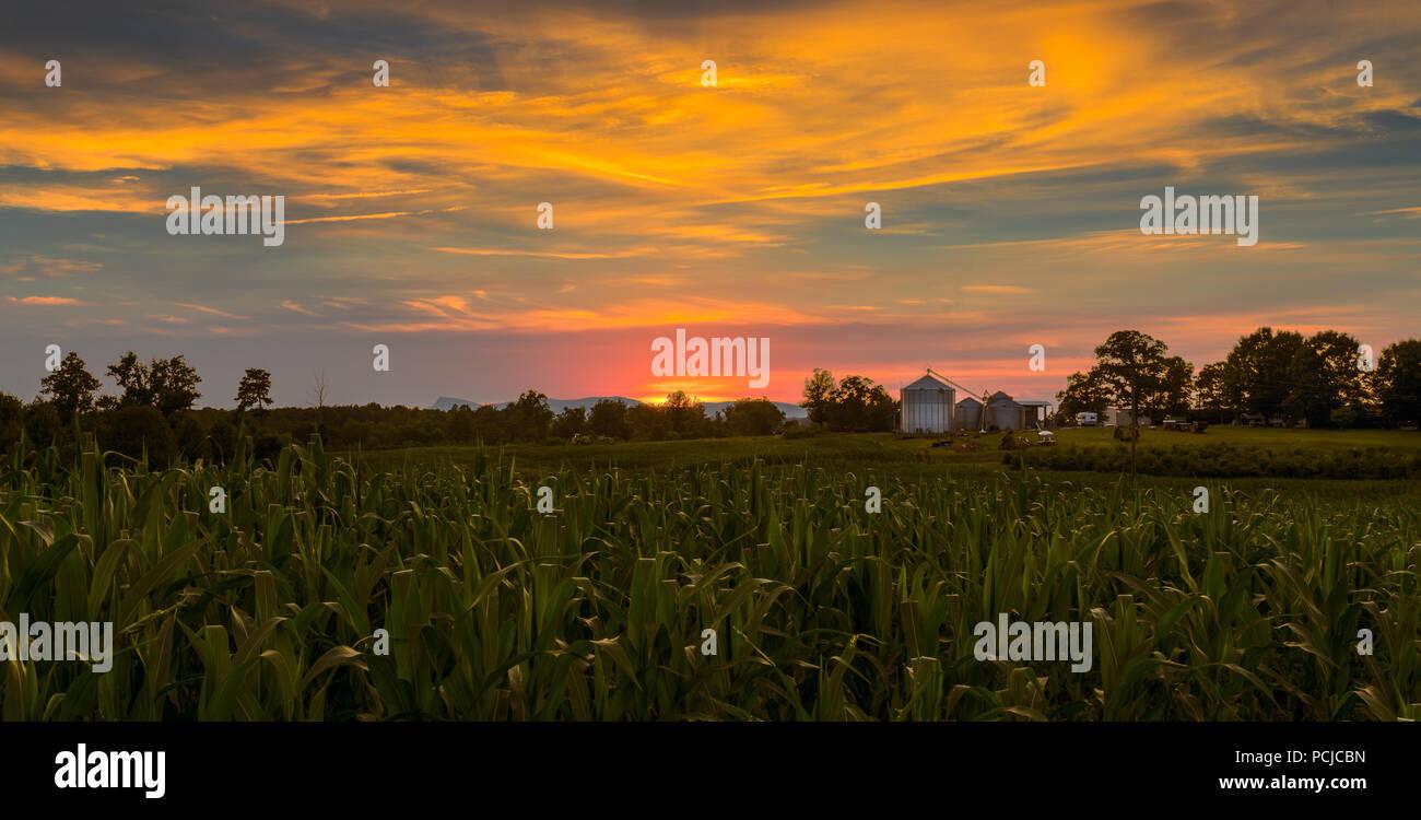 Tramonto nel paese di fattoria, North Carolina. Campo di grano in primo piano e la fattoria di lavoro medio. Foto Stock
