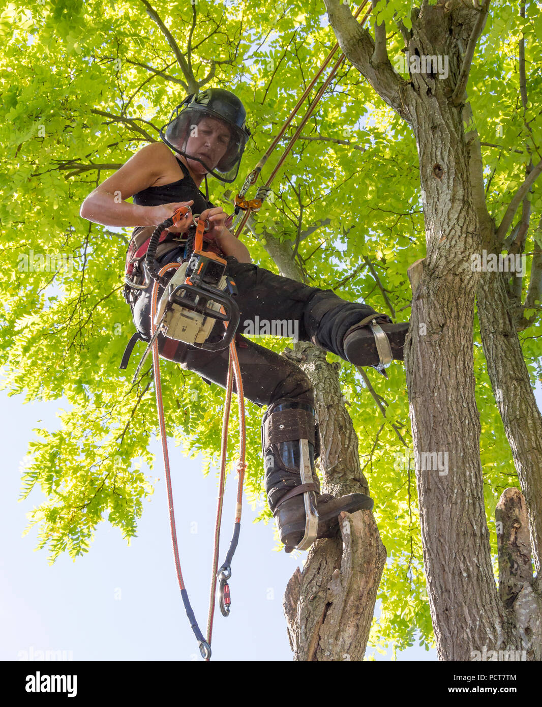 Arborist femmina è ora di prepararsi a utilizzare una sega a nastro Immagini Stock