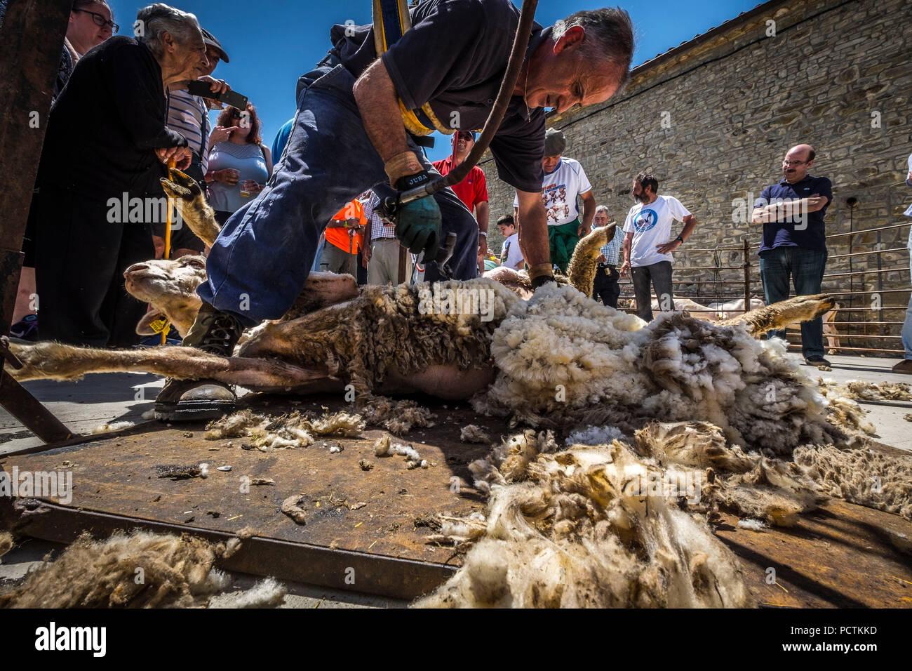 Soria, Spagna - 10 giugno 2017, festa popolare alla fine di una pecora transumanti rotta in un piccolo borgo rurale di Soria in Spagna, 2017, la tosatura delle pecore in una piccola città in Soria in Spagna Immagini Stock