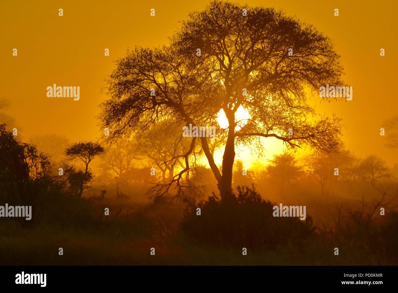 Sud Africa, una fantastica destinazione di viaggio per sperimentare e terzo e primo mondo insieme. Ethereal sunrise su foschia mattutina nel Parco Nazionale di Kruger. Foto Stock
