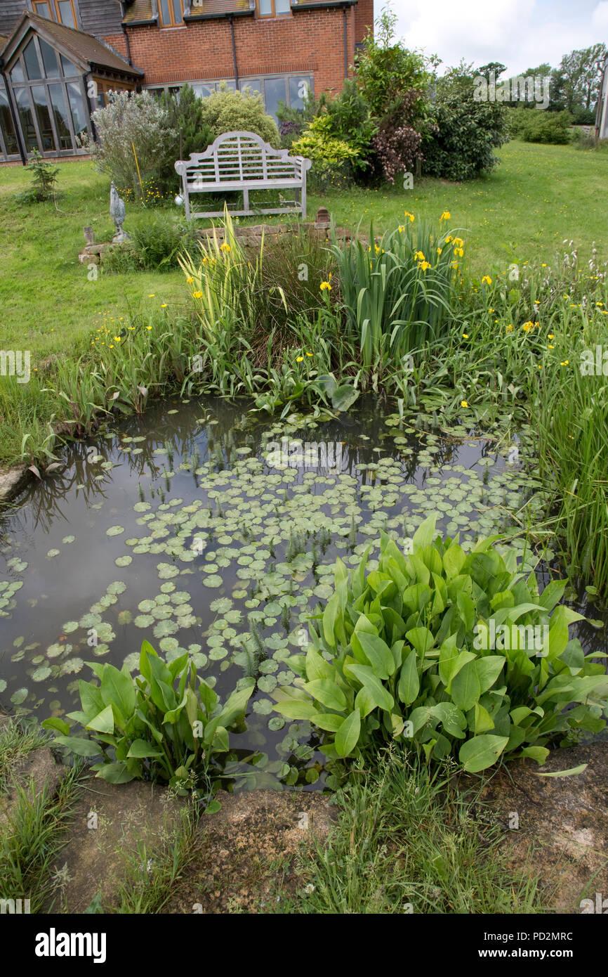 Selvatica del laghetto in giardino con varietà di piante acquatiche Costwolds REGNO UNITO Foto Stock