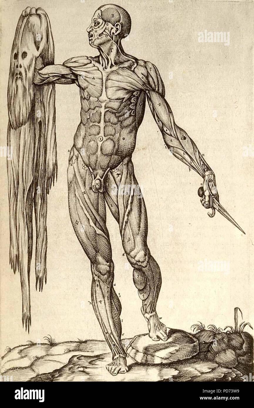 Anatomia del corpo humano. Immagini Stock