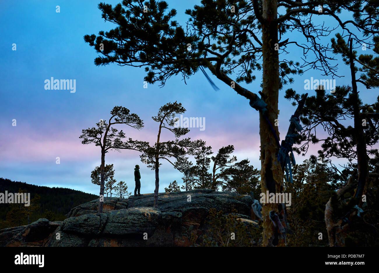 Uomo in silhouette tra alberi di pino di Karkaraly parco nazionale in Kazakistan centrale al tramonto viola Immagini Stock