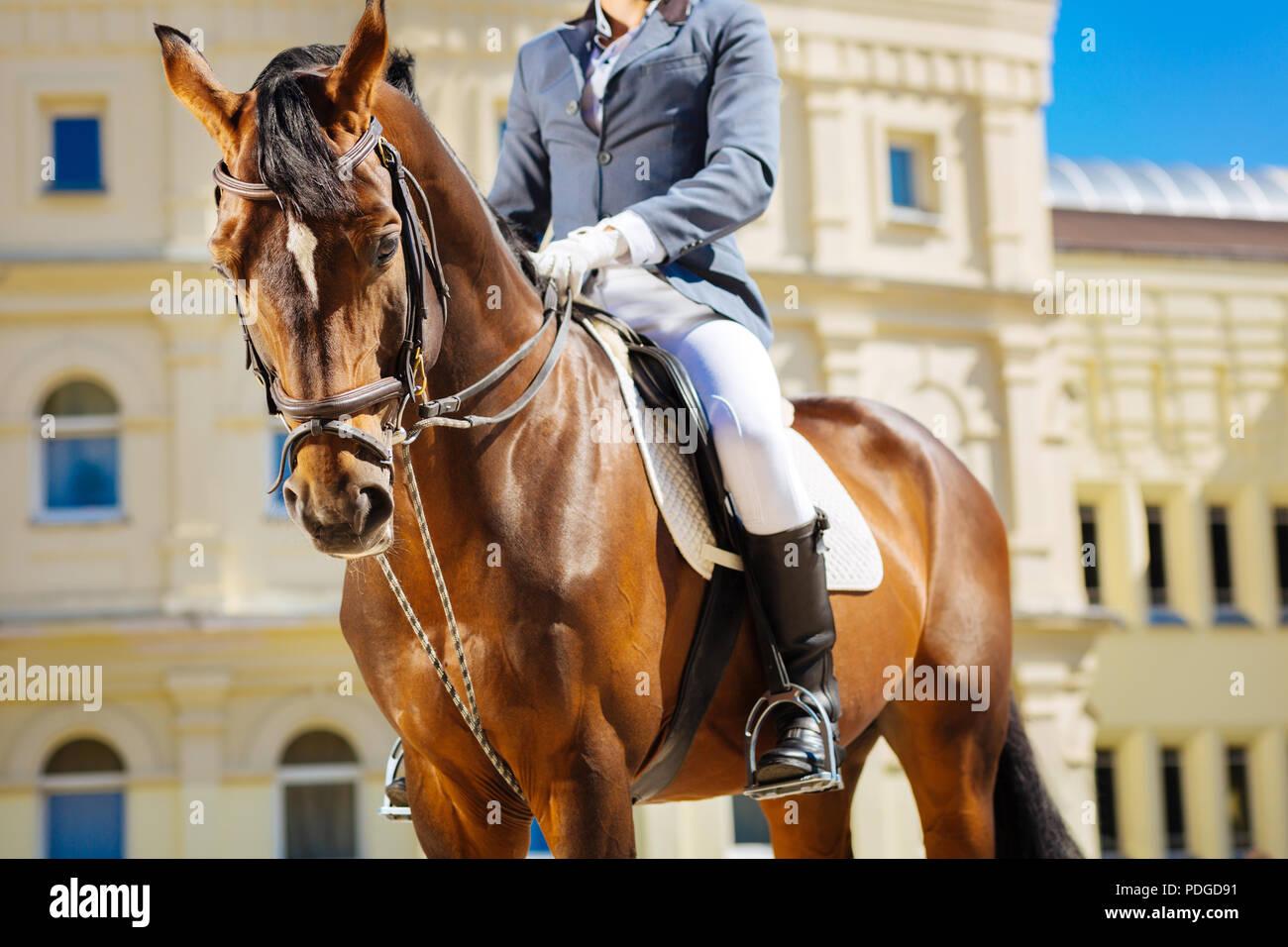 Equestre nero da indossare stivali da cavallo in sella al suo cavallo preferito Immagini Stock