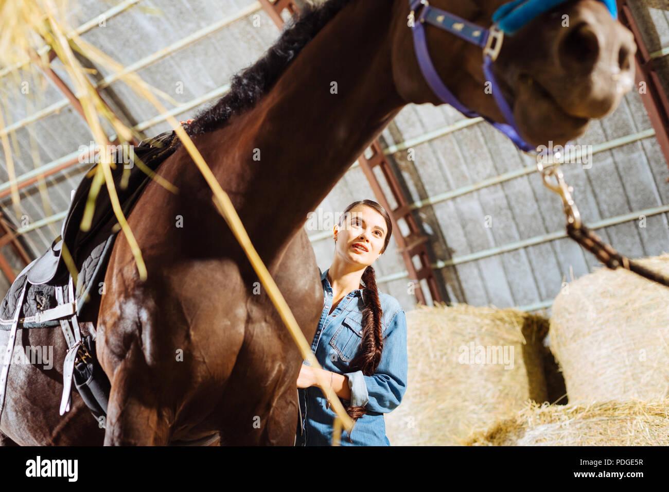 Giovani cavallerizza con lunghi capelli scuri alimentando il suo cavallo da corsa Immagini Stock