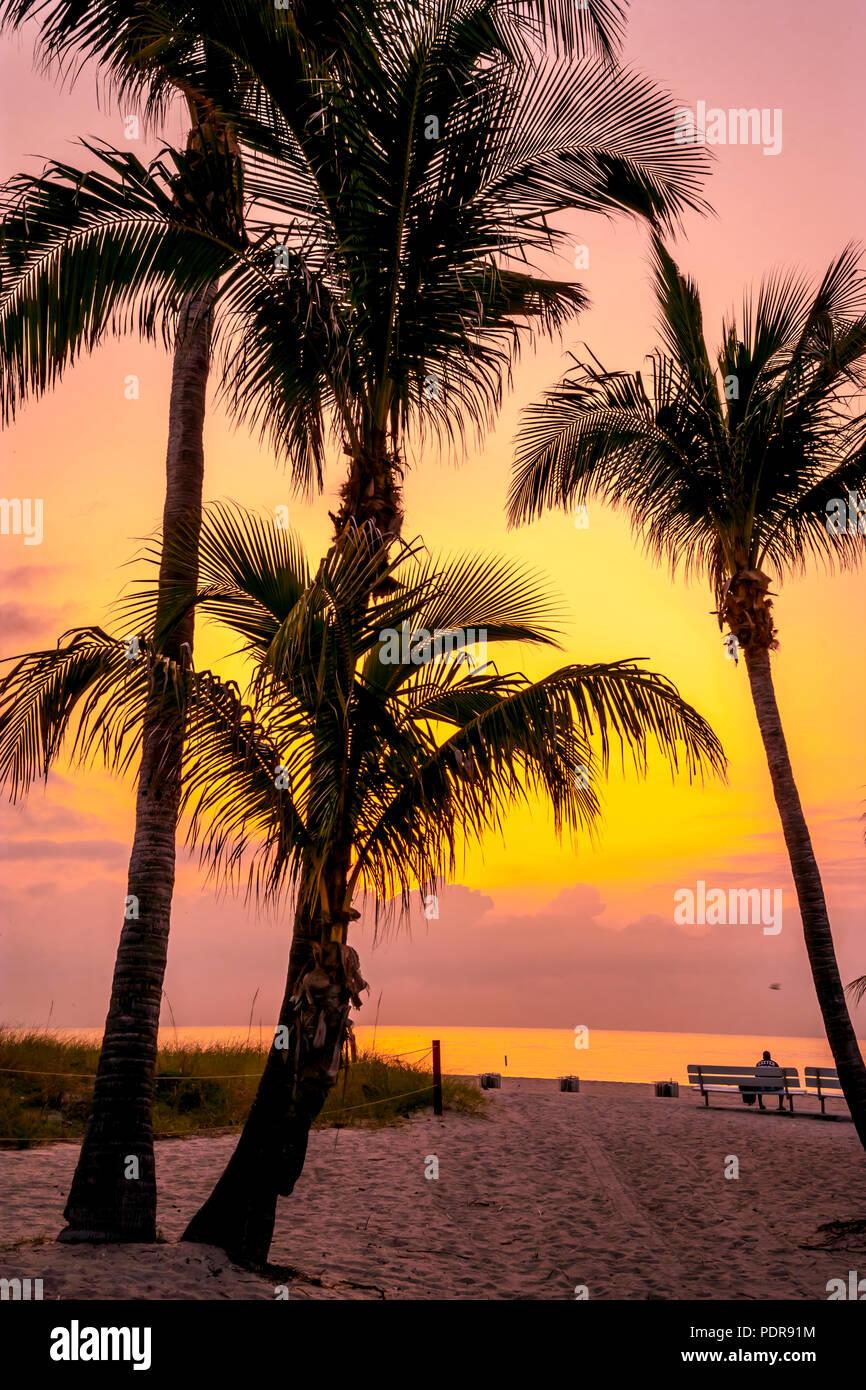 Pompano Beach mattina sihouette palme giallo sfondo arancione Immagini Stock