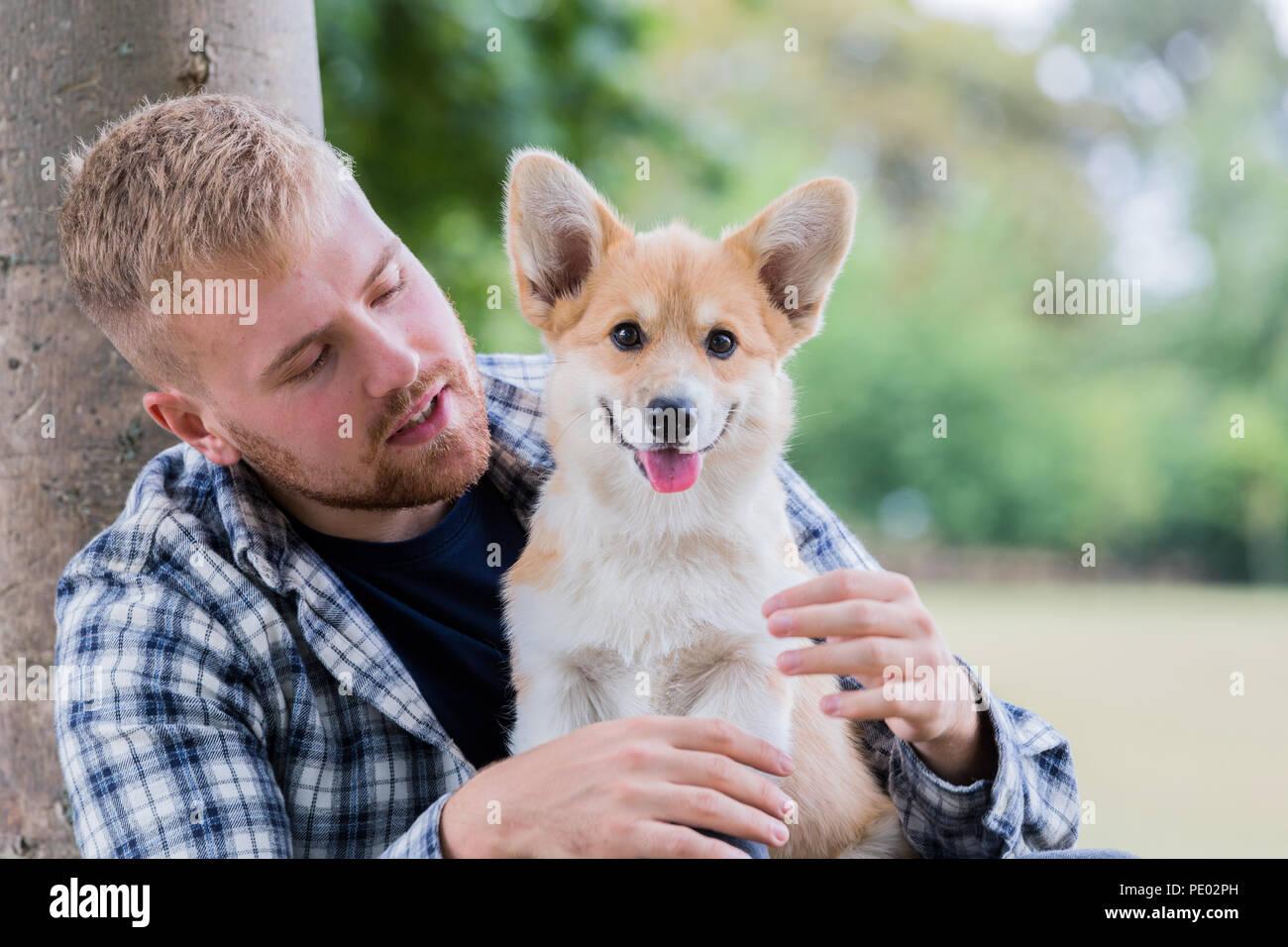4 mesi di Lingua gallese Corgi Pembroke cucciolo su una passeggiata con il suo maschio proprietario in campagna, Oxfordshire, Regno Unito Foto Stock