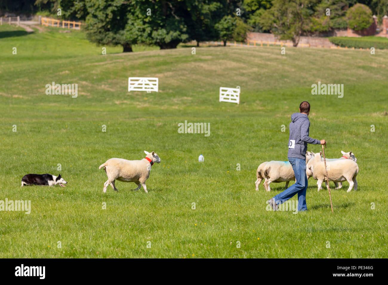 Un Maschio Di Pastore E Il Suo Cane Da Pecore Pecore Di Guida Lungo