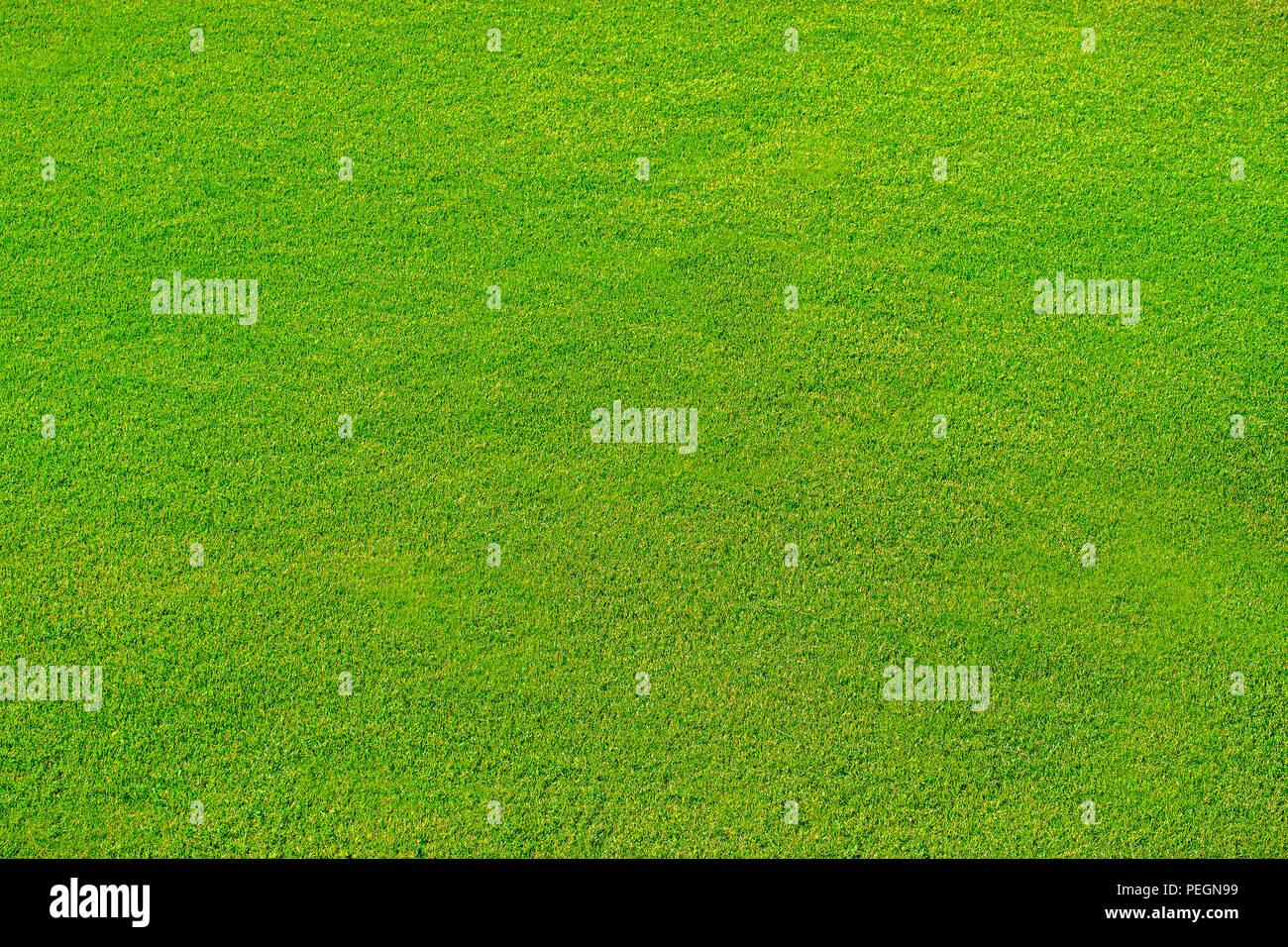 Prato Verde Per Sfondoverde Erba Texture Di Sfondo Vista Dallalto