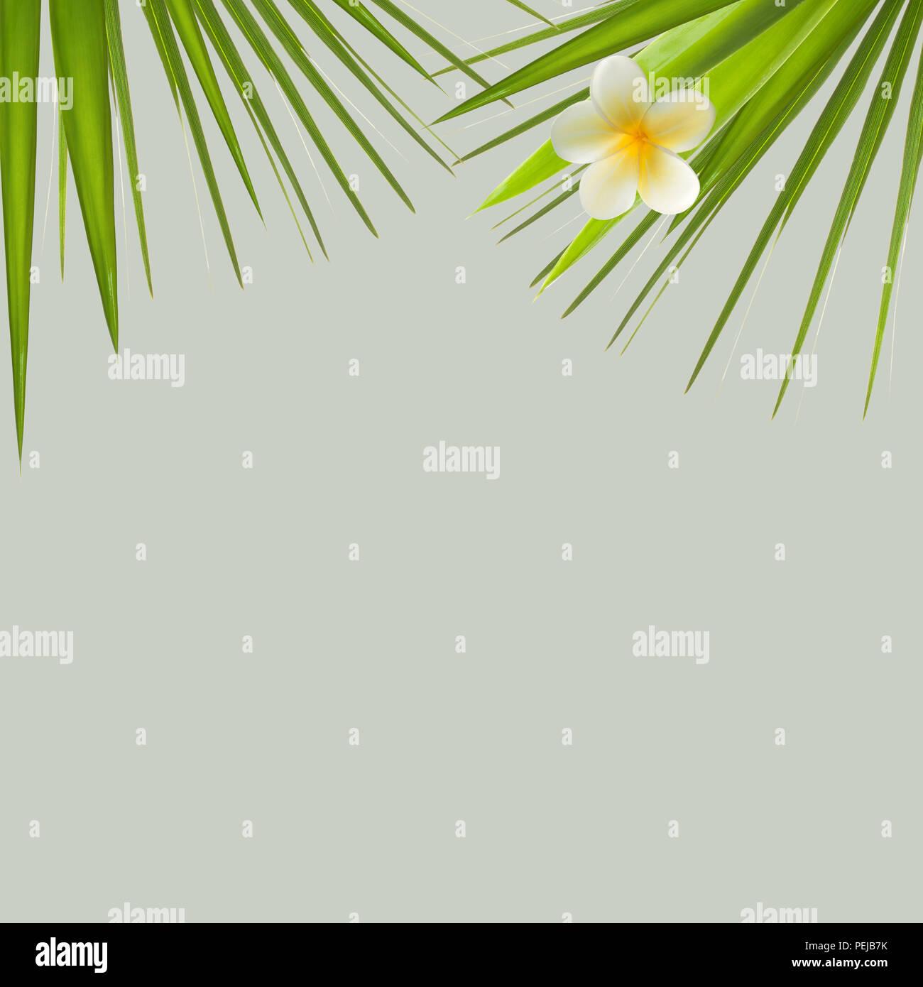 Green Holiday Wallpaper Abstract Immagini Green Holiday Wallpaper