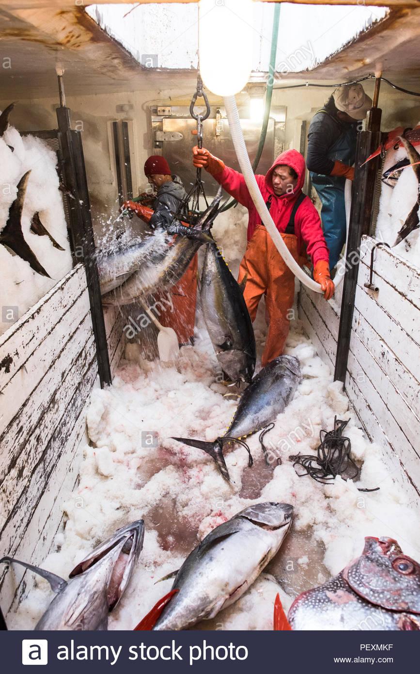 Deckhands pesce che si muove attorno ad un congelatore in barca da pesca a San Diego, California, Stati Uniti d'America Immagini Stock