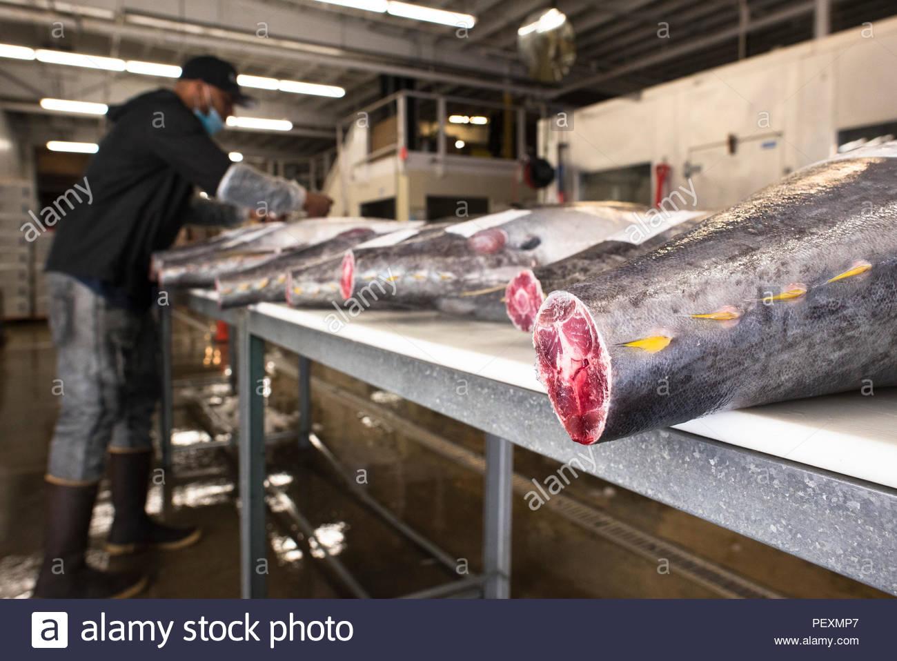 Classificazione di sushi al mercato del pesce, San Diego, California, Stati Uniti d'America Immagini Stock