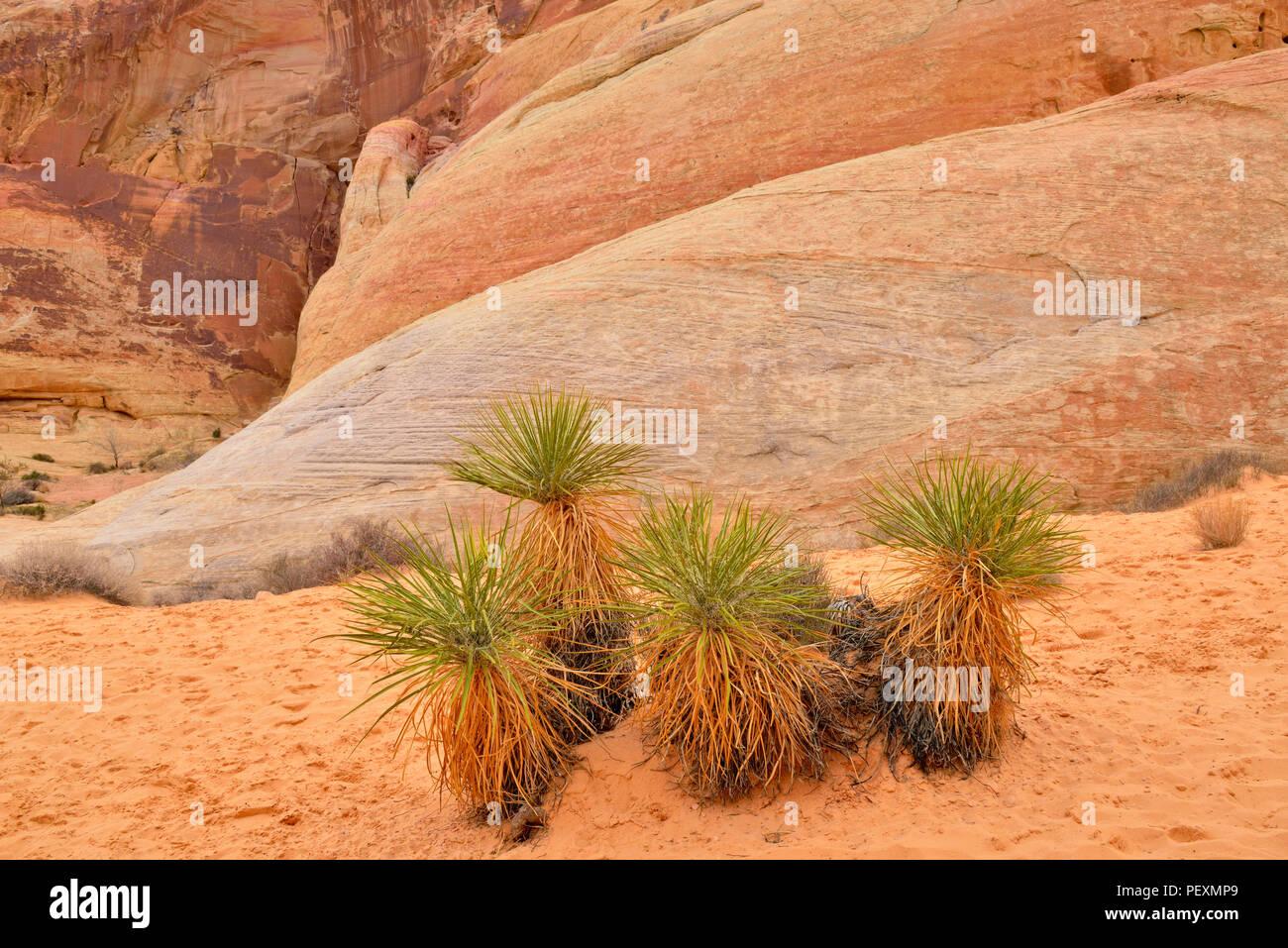 Yucca Valle risalente