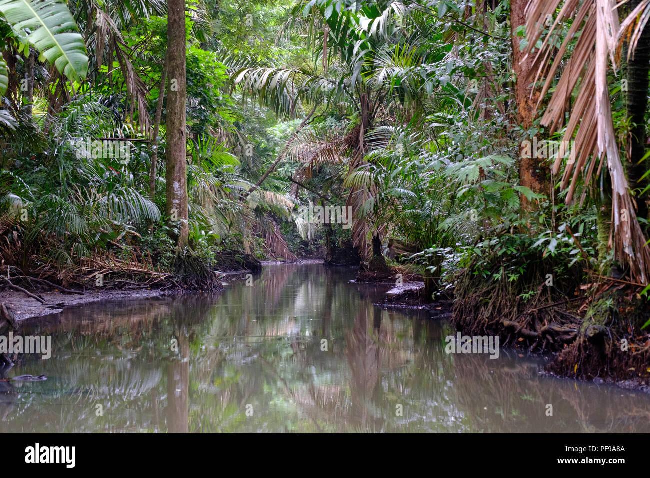 Fiume stretto nella densa foresta pluviale di Tortugero Immagini Stock