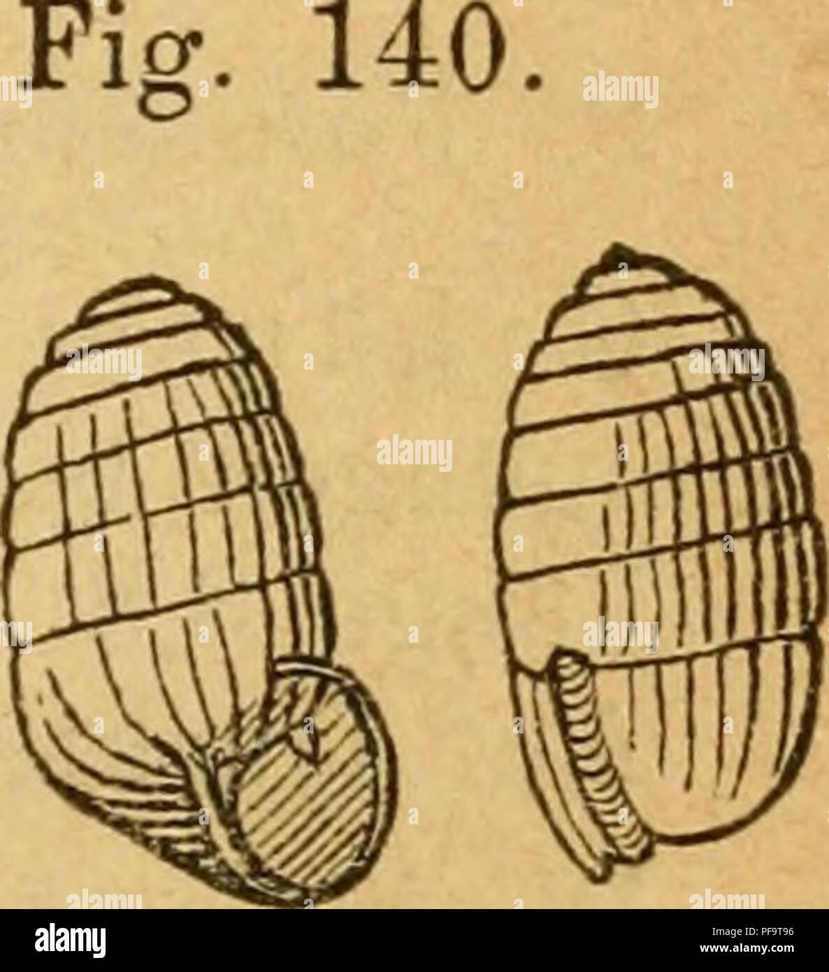 Anatomie Rücken Immagini & Anatomie Rücken Fotos Stock - Alamy