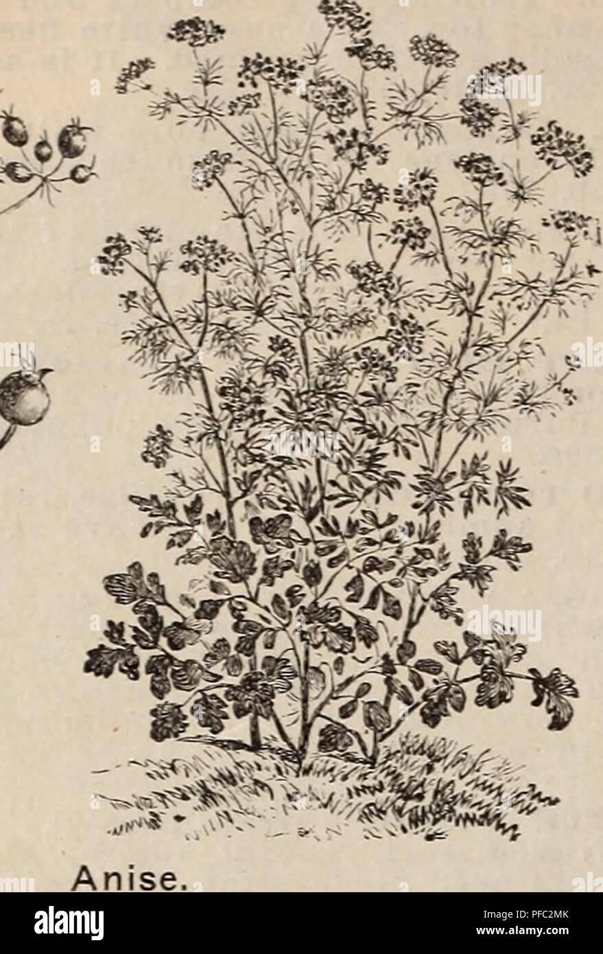Catalogo descrittivo e listino prezzi : fiore, campo e giardino semi ...