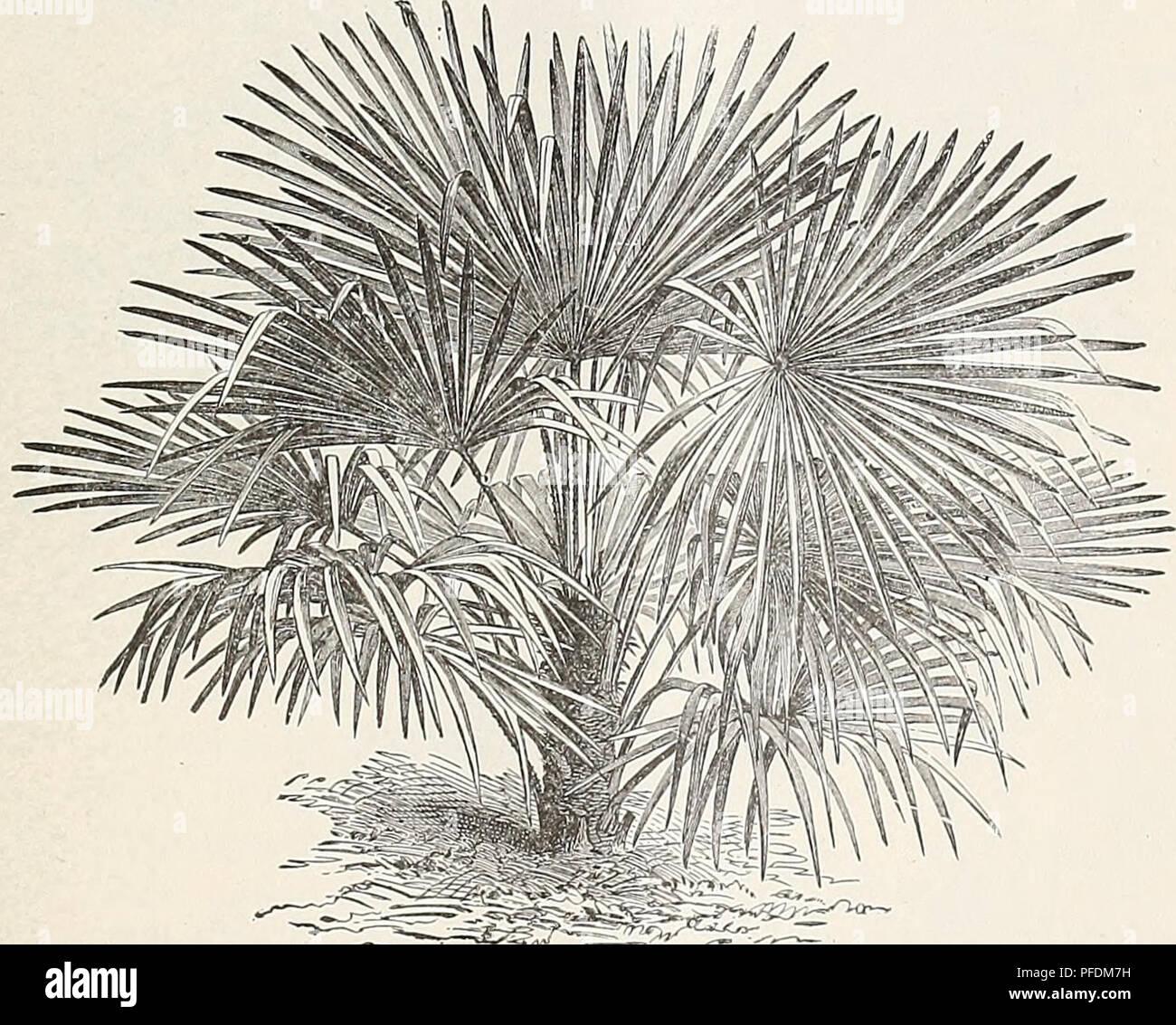 Tipi Di Piante Sempreverdi catalogo descrittivo di latifoglie e sempreverdi alberi