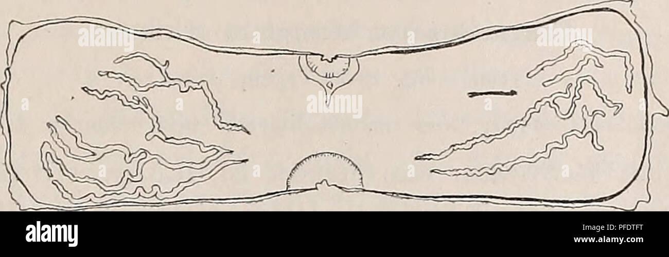 Schematisch Immagini & Schematisch Fotos Stock - Alamy