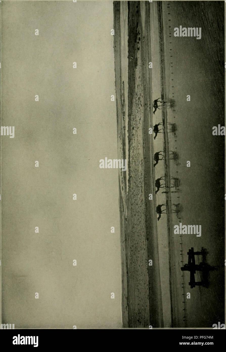 . Das Leben der Pflanze. Piante; piante; piante; Phytogeography. . Si prega di notare che queste immagini vengono estratte dalla pagina sottoposta a scansione di immagini che possono essere state migliorate digitalmente per la leggibilità - Colorazione e aspetto di queste illustrazioni potrebbero non perfettamente assomigliano al lavoro originale. Francé, R. H. (Raoul Heinrich), 1874-1943; Gothan, Walther Ulrich Eduard Friedrich, 1879-1954; Lange, Willy, 1864-. Stoccarda, Kosmos, Gesellschaft der Naturfreunde Foto Stock