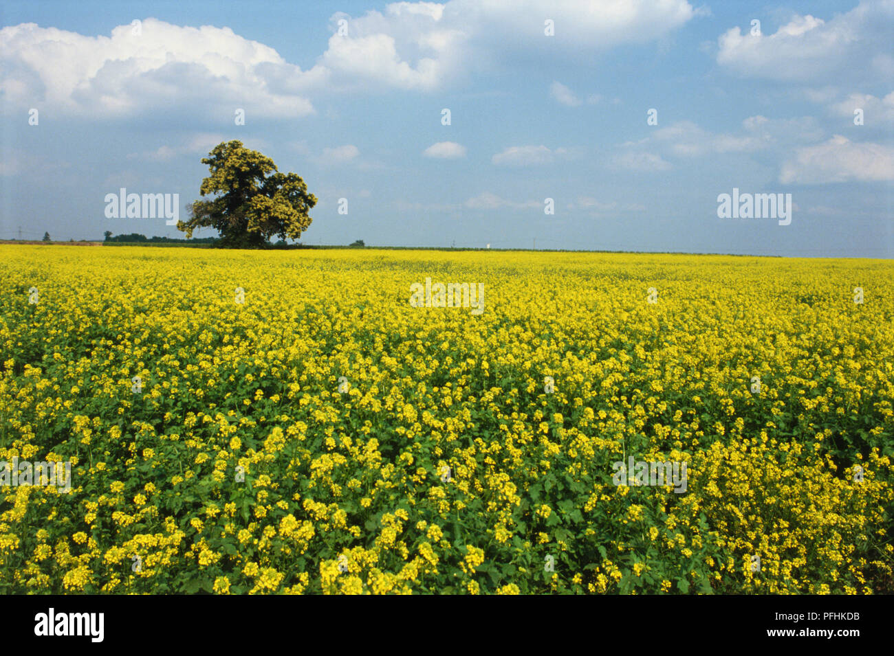 Fiori Gialli Loira.Paesi Della Loira Immagini Paesi Della Loira Fotos Stock Alamy