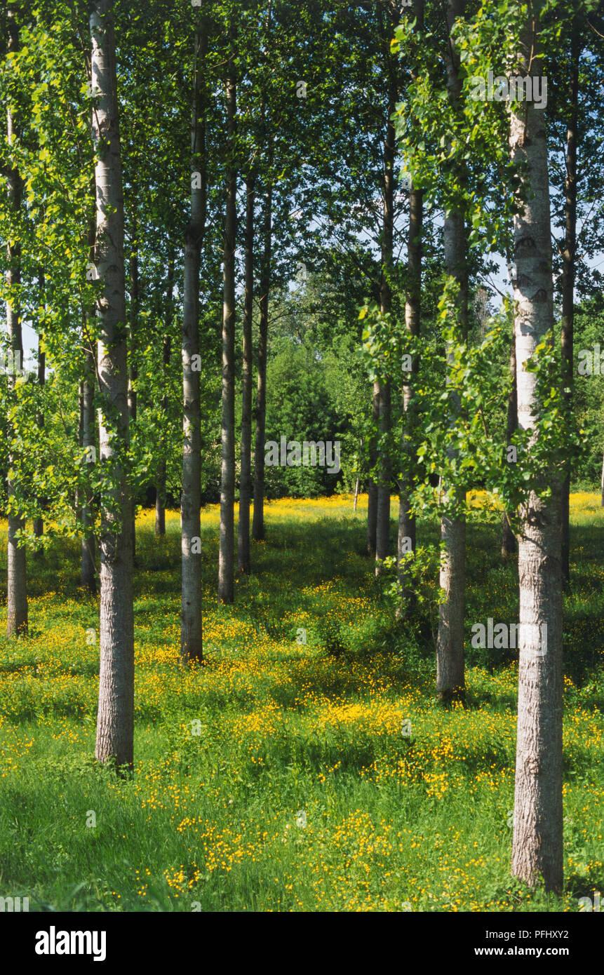 Fiori Gialli Loira.Francia Valle Della Loira La Lorie Farmland File Di Sottili