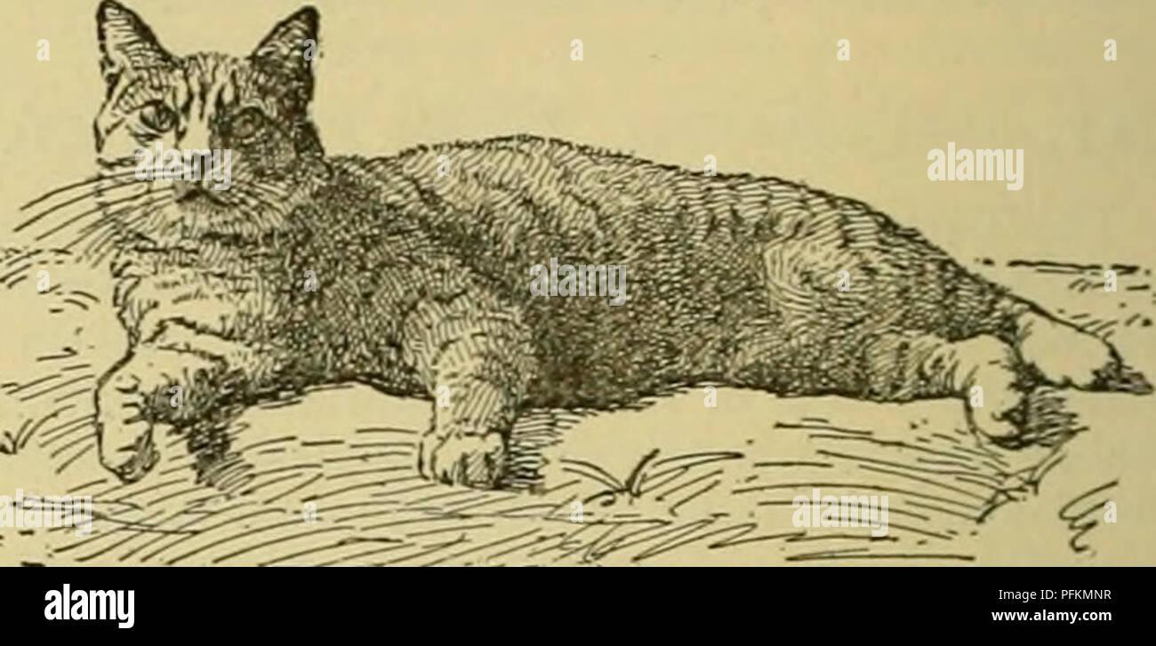 Dellenciclopedia Degli Animali Della Fattoria Animali Domestici