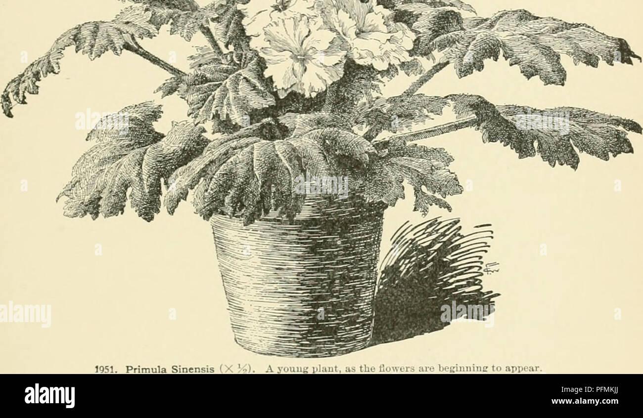 Dell enciclopedia di american orticoltura comprendente