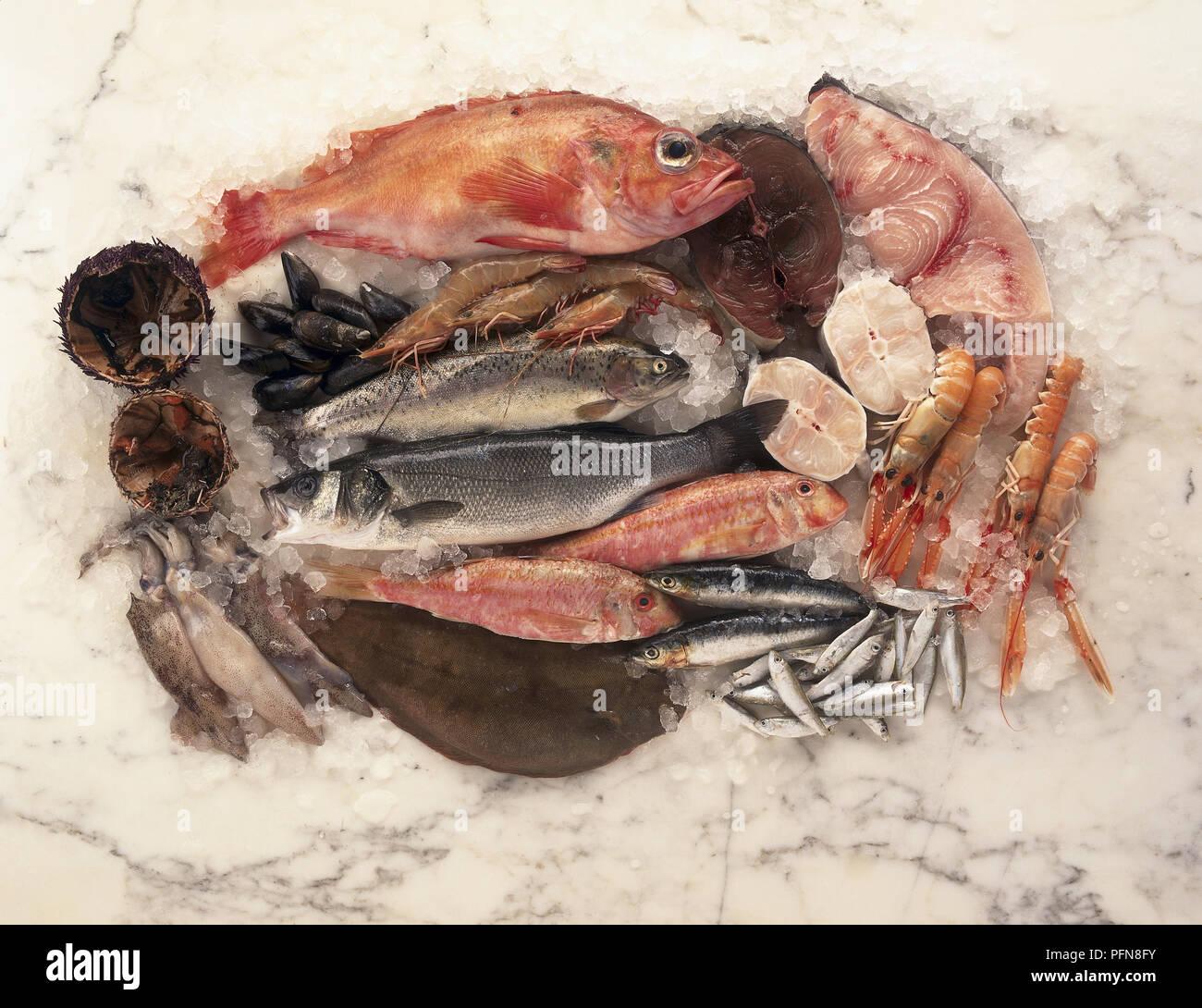 Vista Aerea Di Un Piatto Di Pesce Fresco E Frutti Di Mare Compresi