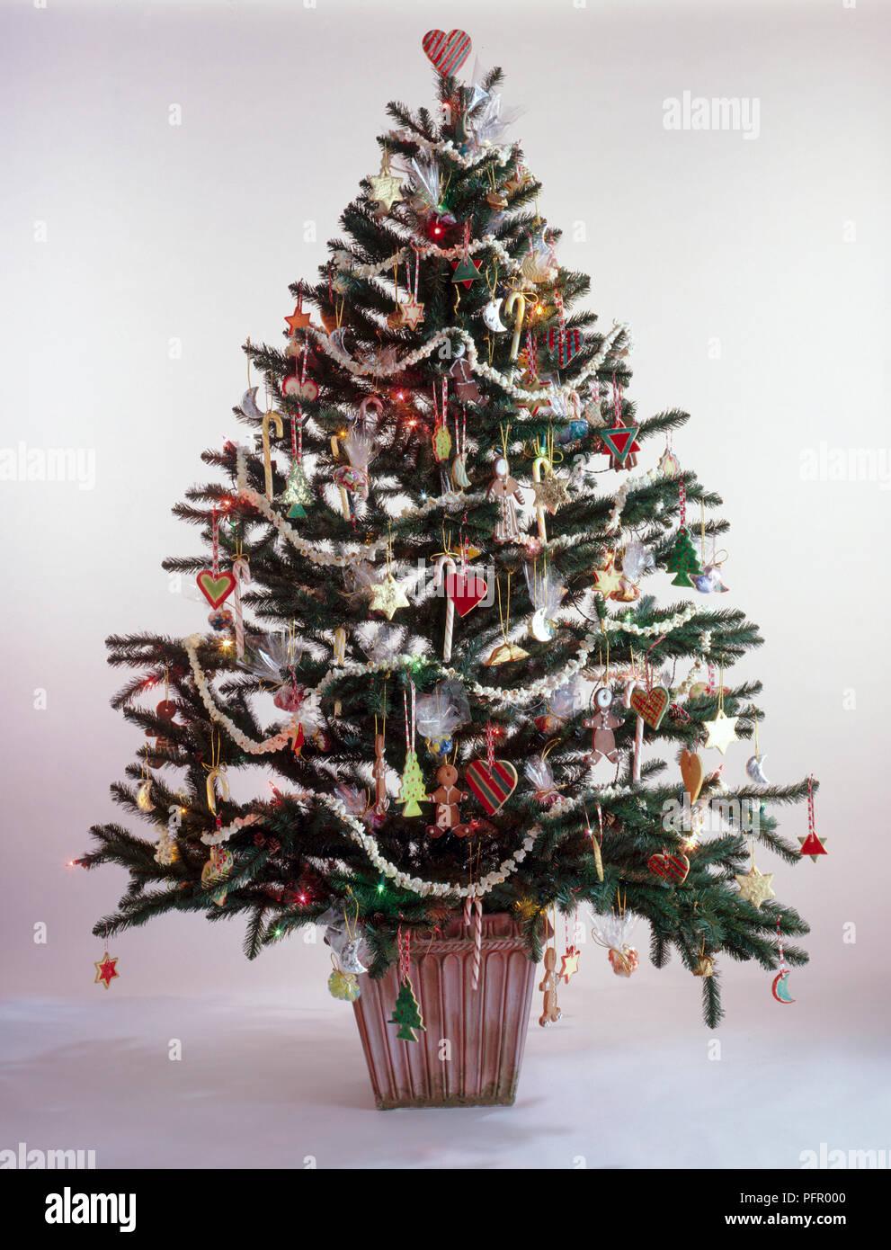 Biscotti Decorati Per Albero Di Natale.Albero Di Natale Con Decorazioni Naturali Di Biscotti E Di Ghirlande