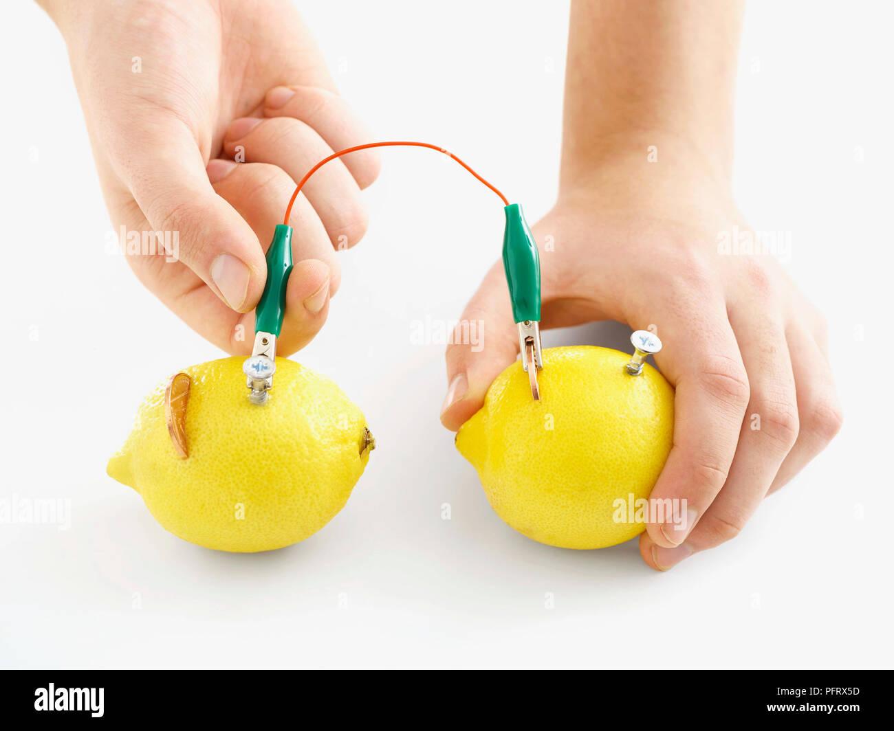 Batteria di limone esperimento Passo 3 di 6, unire due limoni con una clip a coccodrillo Immagini Stock
