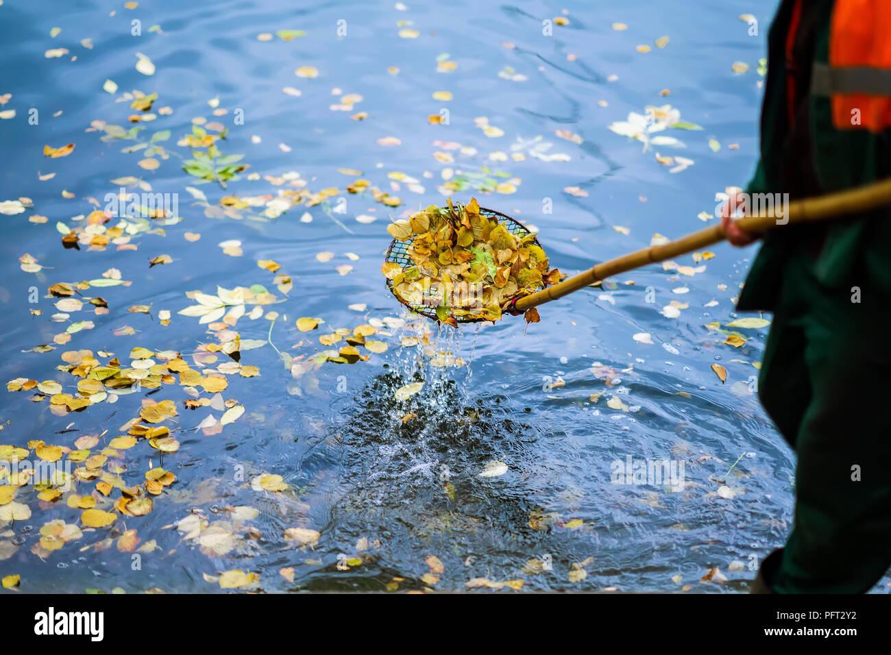 Pulizia piscina nel parco da caduta foglie con speciale maglia in autunno, opera in città all'aperto, , scena reale Immagini Stock