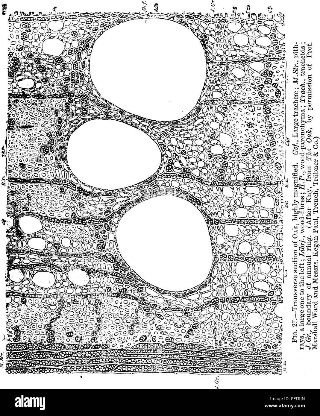 Le Fibre Del Legno legno; un manuale di storia naturale e applicazioni