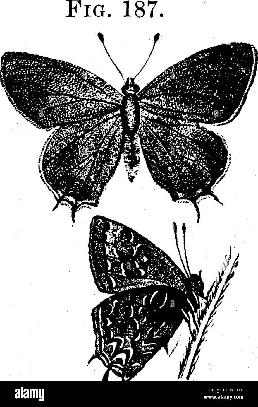 Farfalle nella datazione dello stomaco