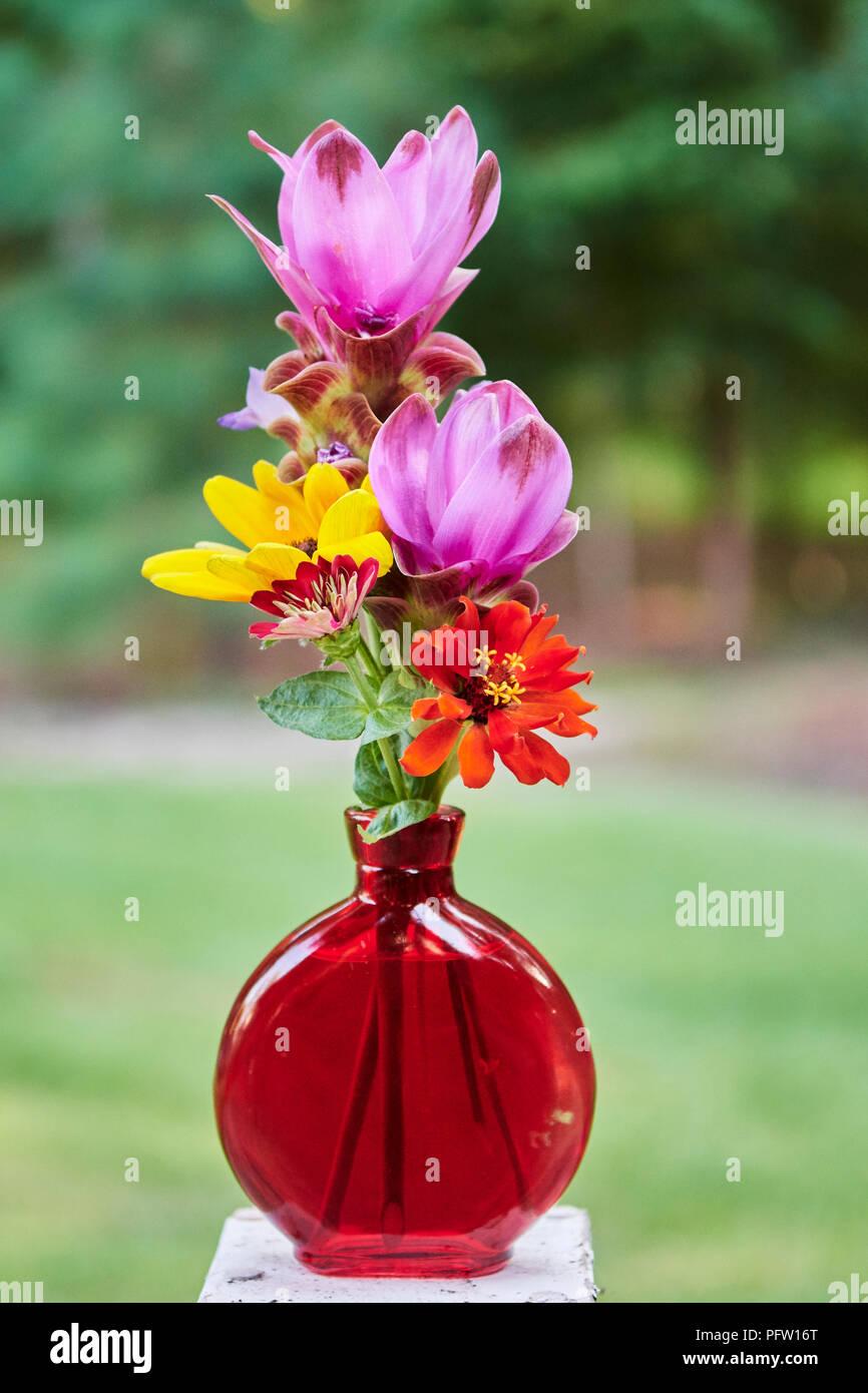 Rosa curcuma alismatifolia o curcuma e fiori di colore giallo e rosso zinnias o daisy fiori in un vaso rosso. Immagini Stock
