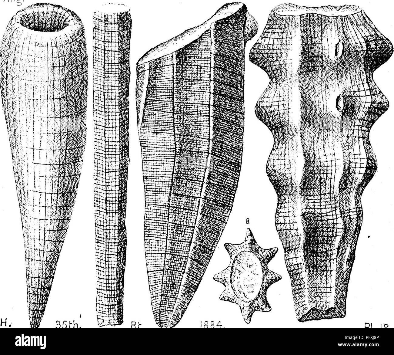 Quali sono 2 modi di datare fossili