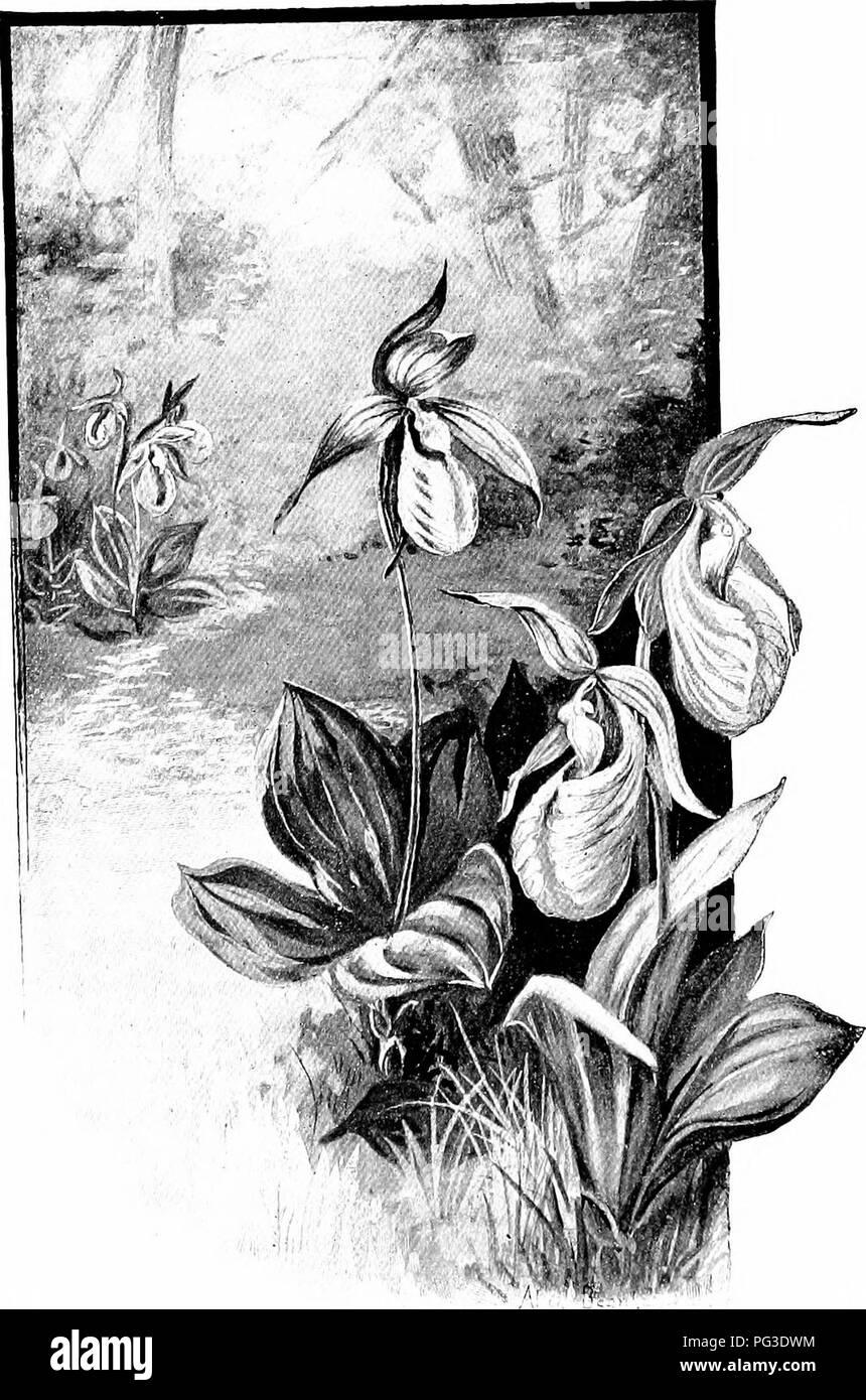 Stivaletti estivi con catena PTR 1851