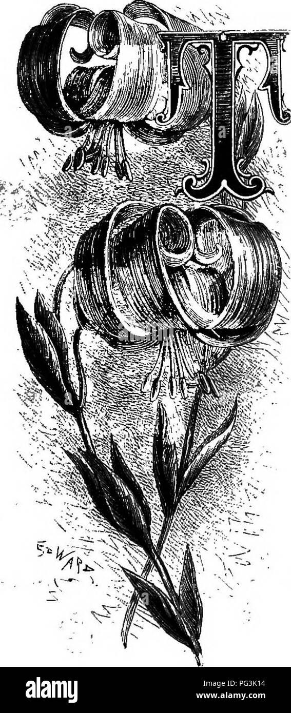 Fiori Da Giardino In Montagna familiarità fiori da giardino . fiori e piante ornamentali