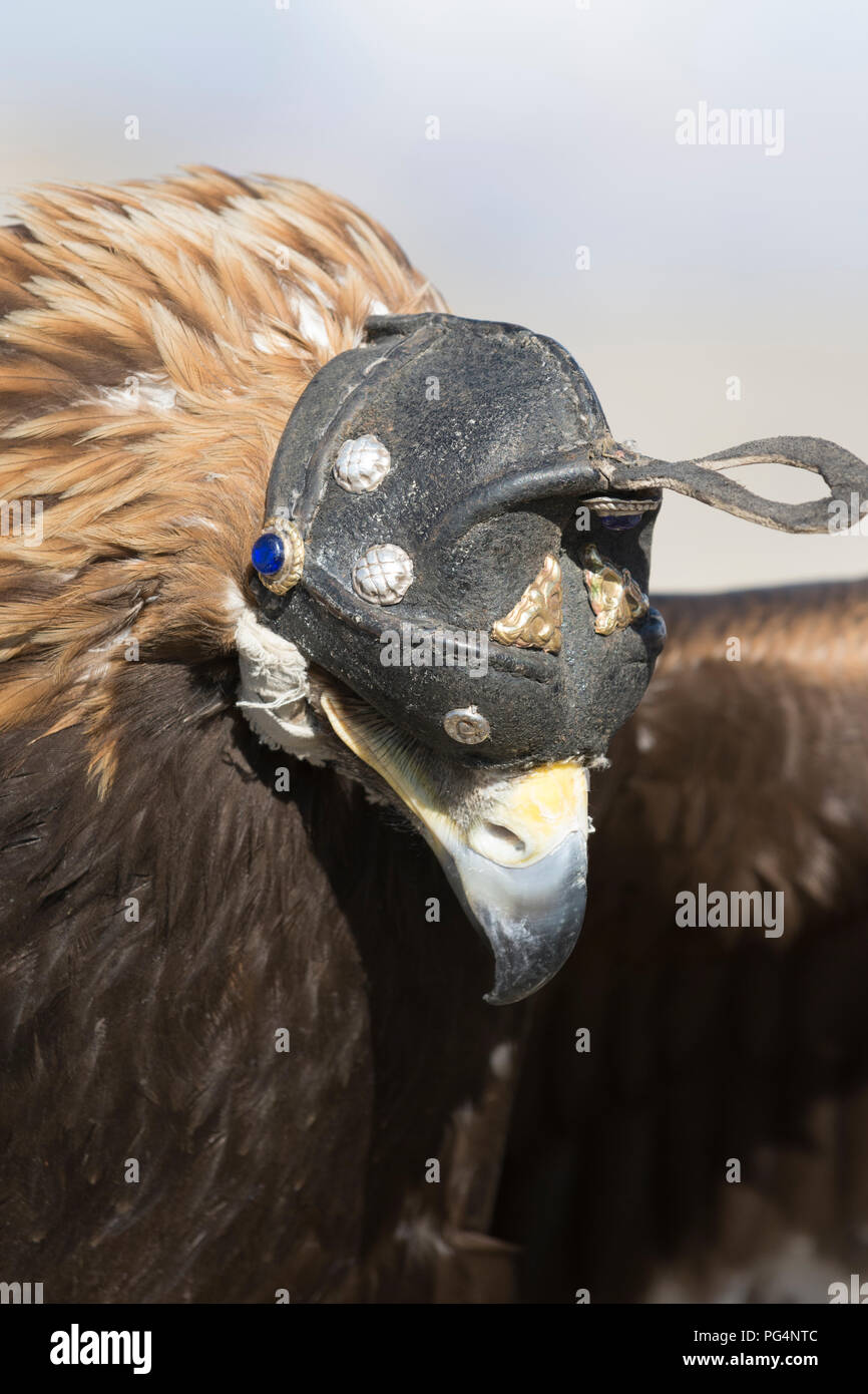 Eagle cacciatore con la sua aquila. Tolbo, Bayan-Ölgii,Mongolia Immagini Stock