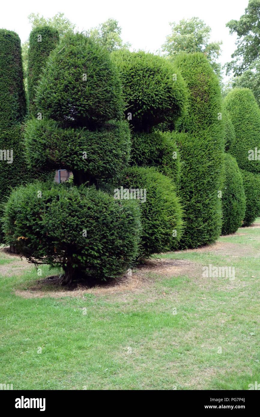 Country house Topiaria da giardino. Piante perenni tagliate in forma Immagini Stock