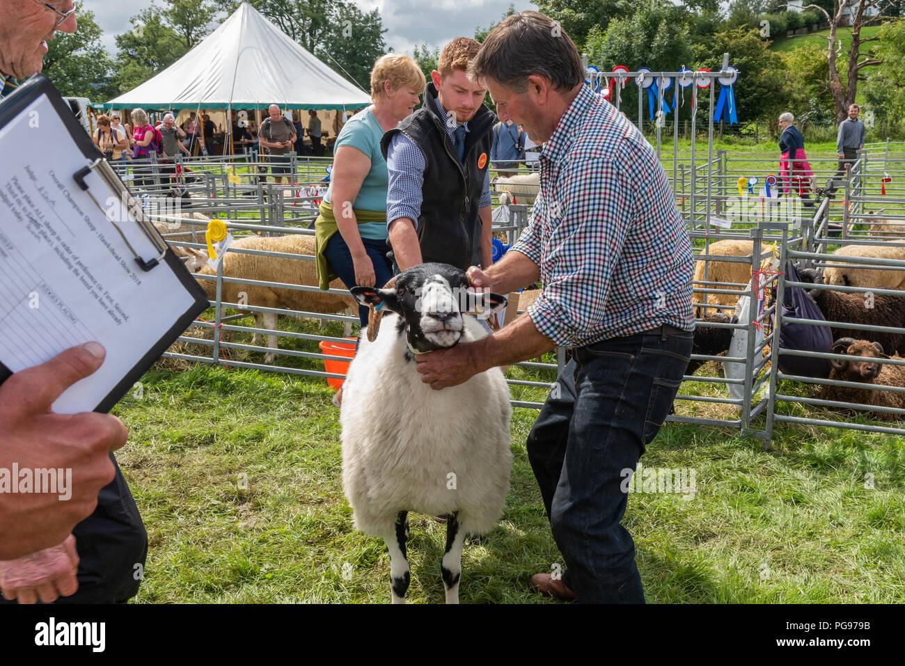 A giudicare il campione globale di ovini al Hawkshead mostrano in Cumbria Foto Stock
