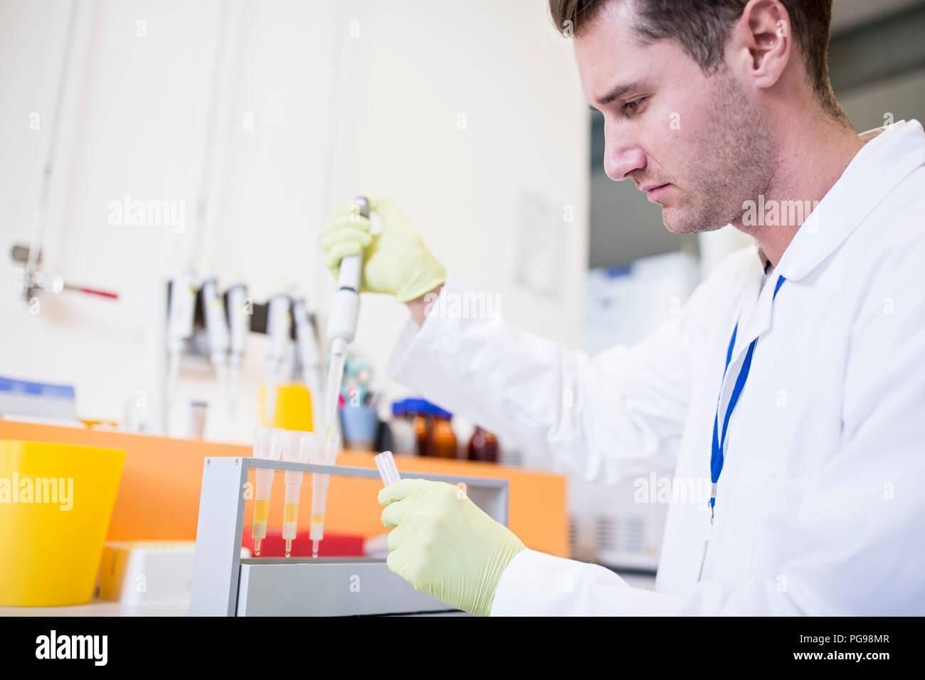 Tecnico di campioni di pipettaggio in cartucce per estrazione in fase solida (SPE). Sds è utilizzato per separare i composti biologici da una miscela per ulteriori analisi. Immagini Stock