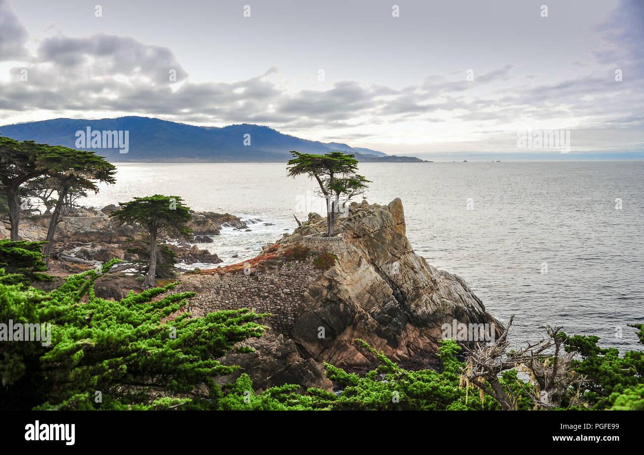 Pebble Beach in California: un lone cipresso sorge sulla costa californiana, 17 Mile Drive vicino Carmelo. Promontorio roccioso, Sfondo oceano Foto Stock