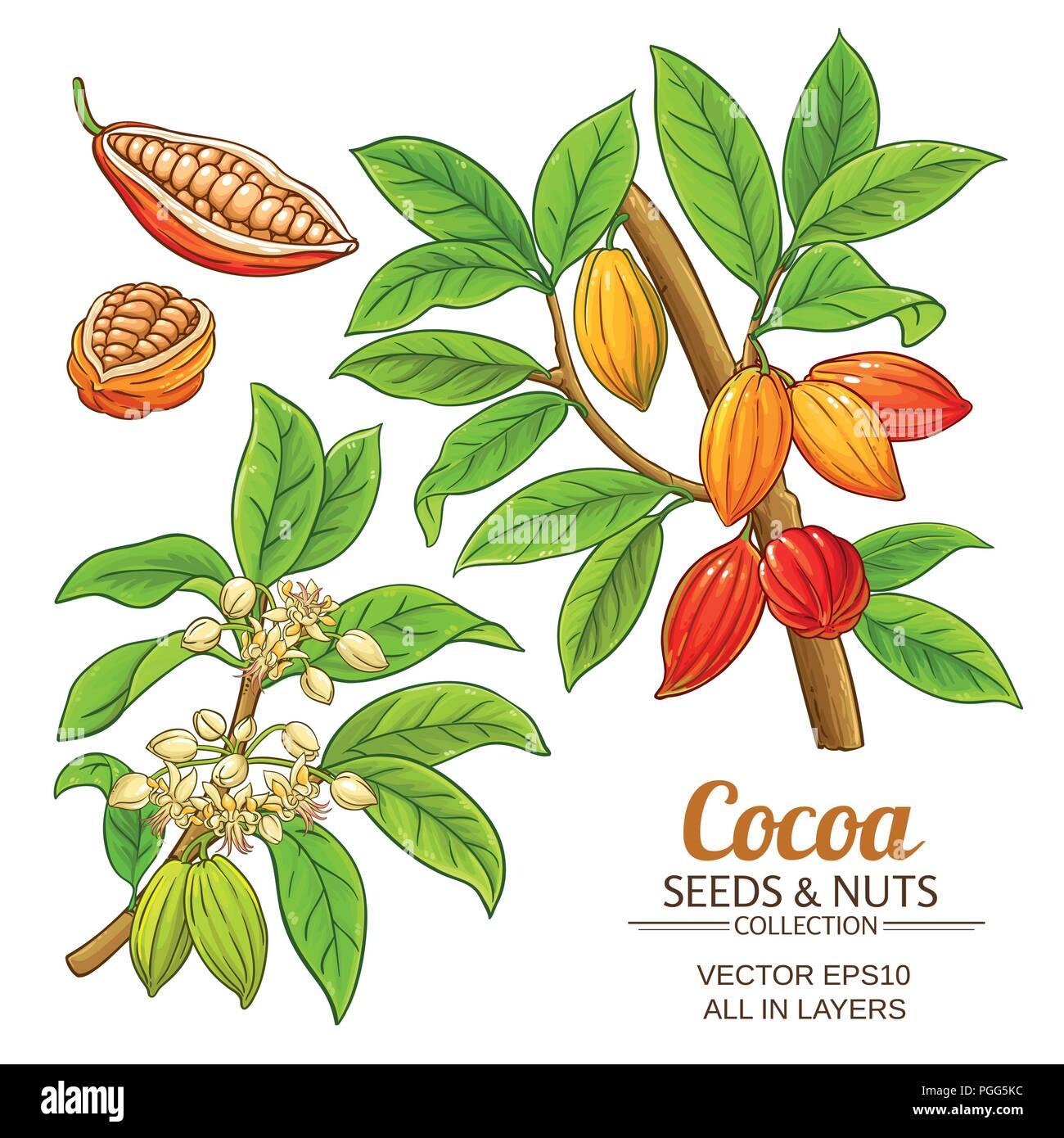 Pianta Di Cacao Vettore Impostato Su Sfondo Bianco Illustrazione