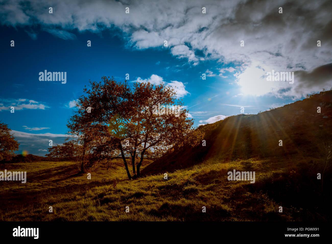 Panorámica de arboles con cielo azul y tonos verdes marrones y. Immagini Stock