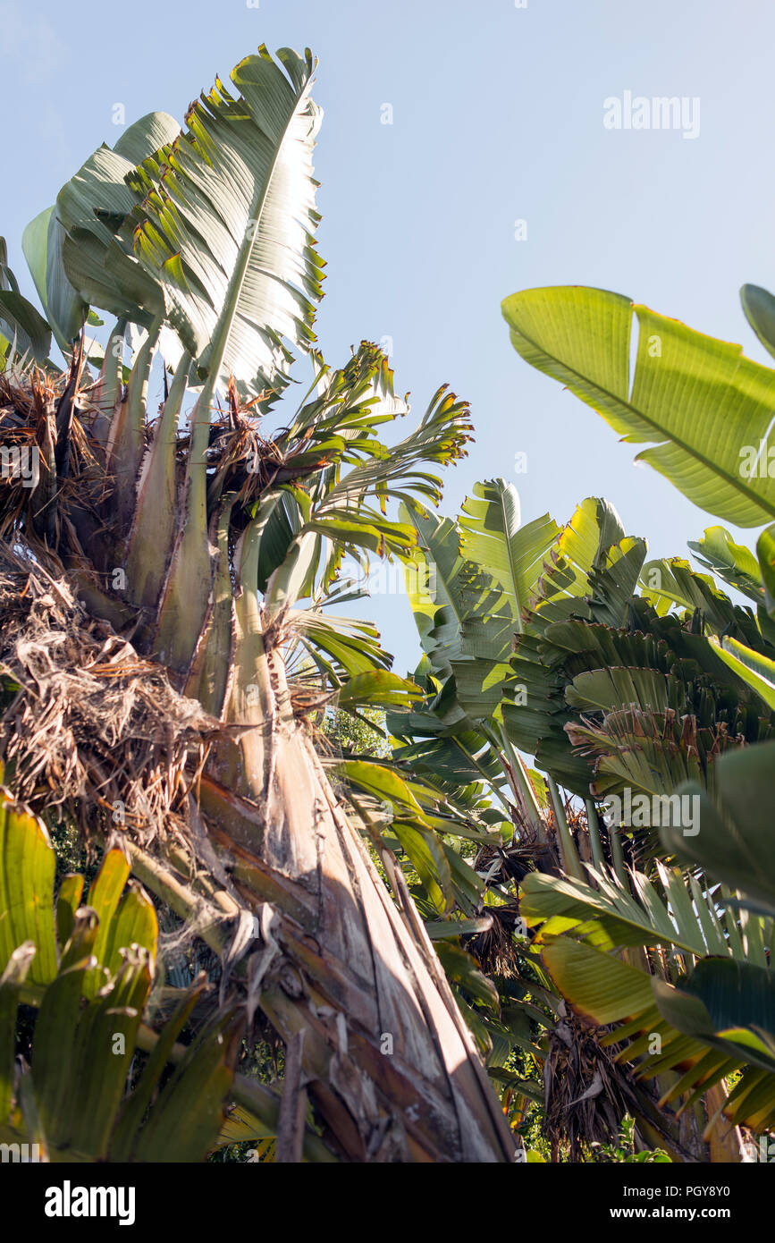 Immagini Di Piante E Alberi una vista di alberi di banane e di piante e alberi foto