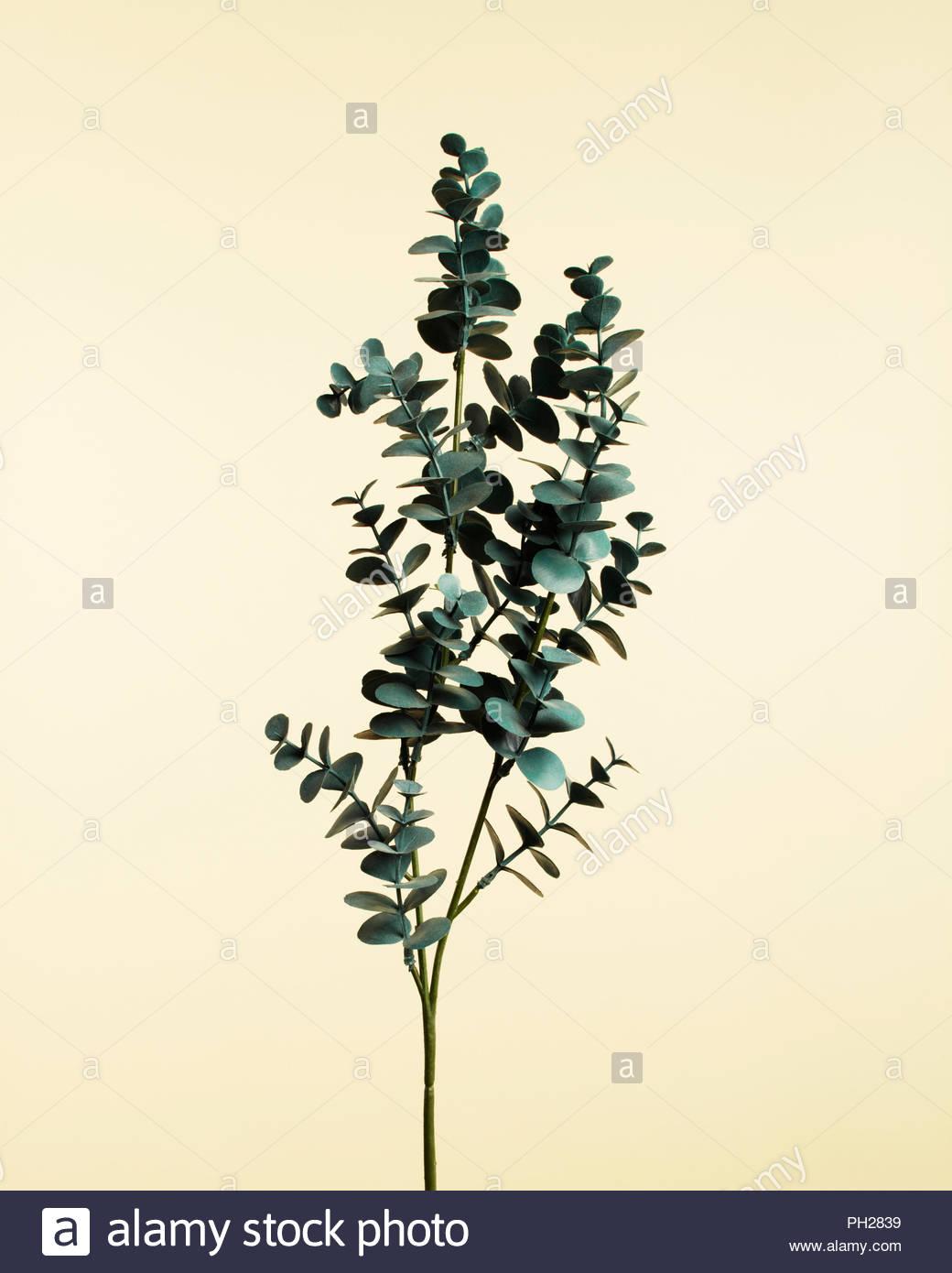Ramoscello con foglie Immagini Stock