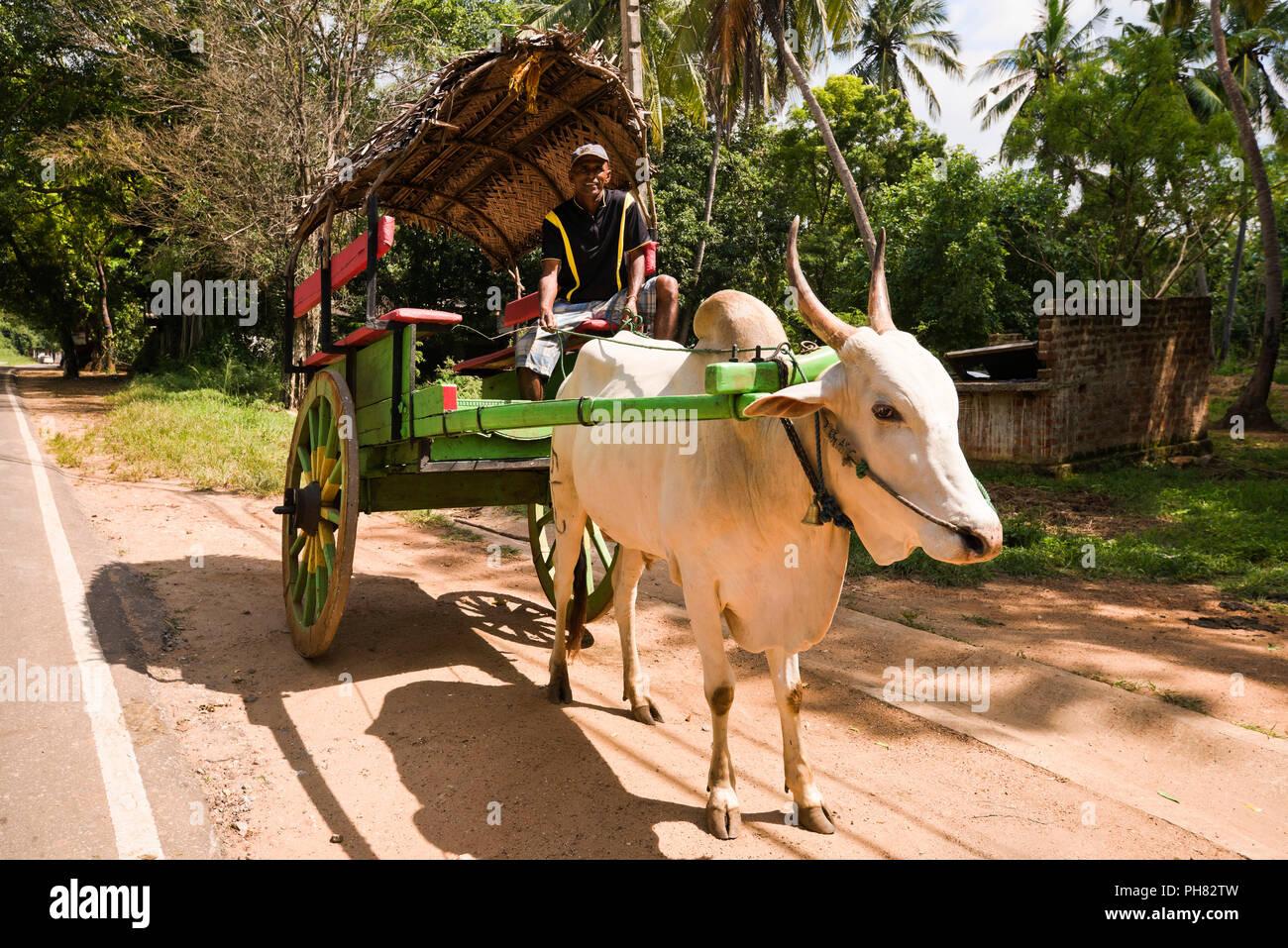 Orizzontale verticale schematica di un cocchio trainato da buoi in Sri Lanka. Immagini Stock