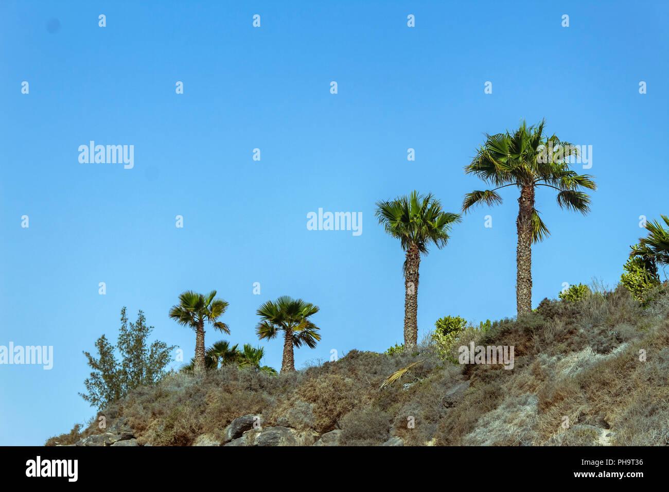 Le palme di fuerteventura guardano il cielo Immagini Stock